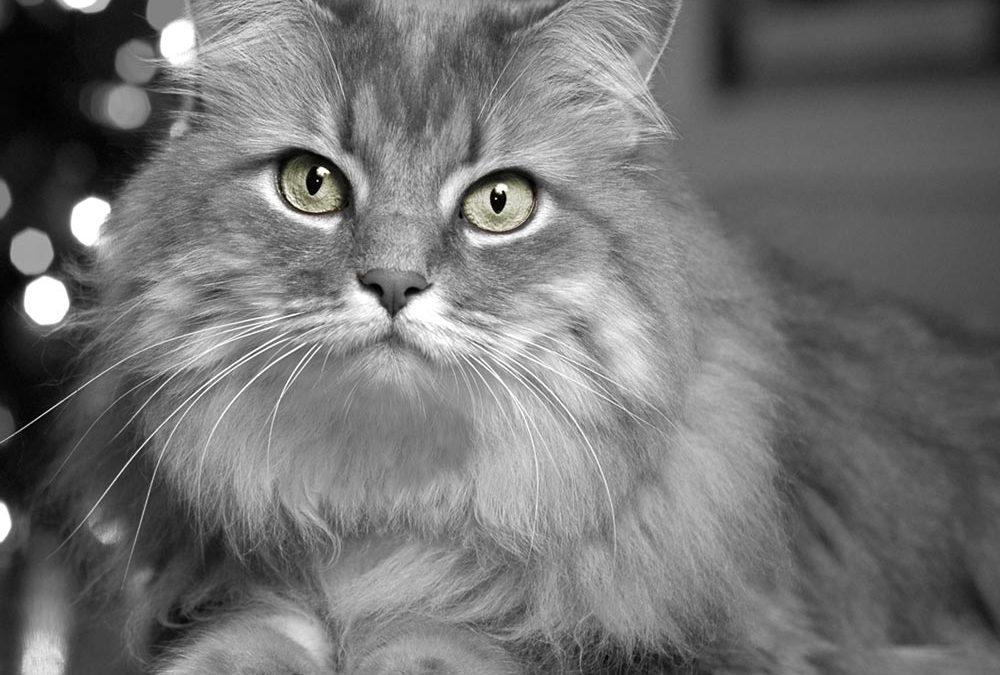 Des chats et du référencement