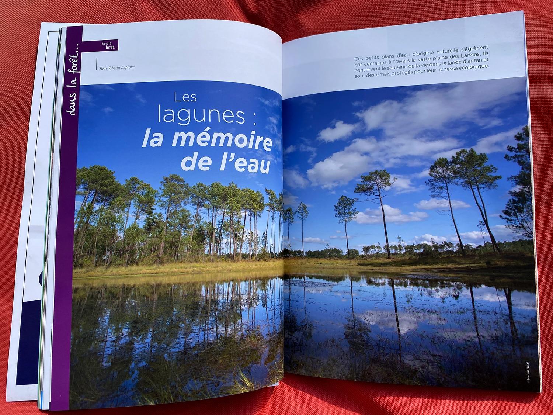 Terres des Landes en Gascogne - Les lagunes